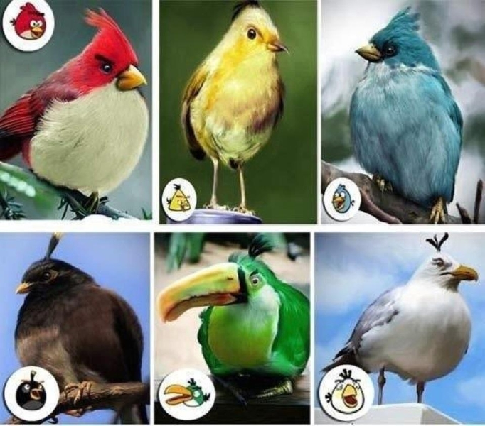 angry-birds-identified