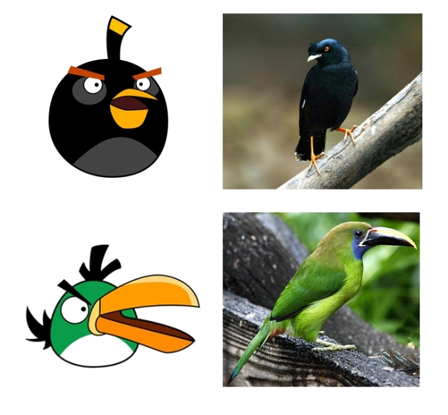 angry_birds_in_real_life_02