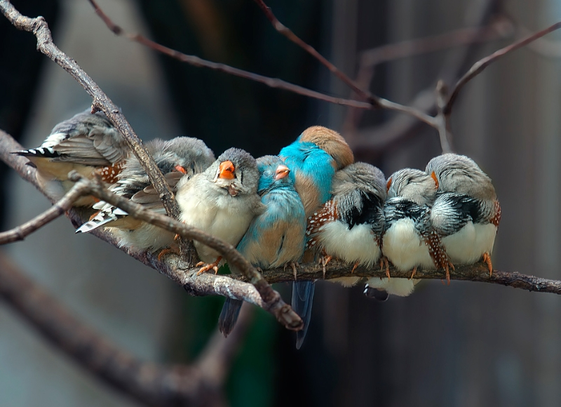 birds-on-a-whire