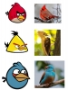 angry_birds_in_real_life