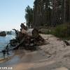 thumbs gribnyie mesta 20 Грибные места возле Киева   где киевлянам собирать грибы