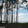 thumbs gribnyie mesta 25 Грибные места возле Киева   где киевлянам собирать грибы