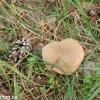 thumbs gribnyie mesta 26 Грибные места возле Киева   где киевлянам собирать грибы