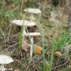 thumbs gribnyie mesta 46 Грибные места возле Киева   где киевлянам собирать грибы