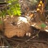 thumbs gribnyie mesta 61 Грибные места возле Киева   где киевлянам собирать грибы