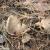 thumbs gribnyie mesta 8 Грибные места возле Киева   где киевлянам собирать грибы