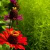 лето цветы