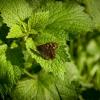 лето бабочка