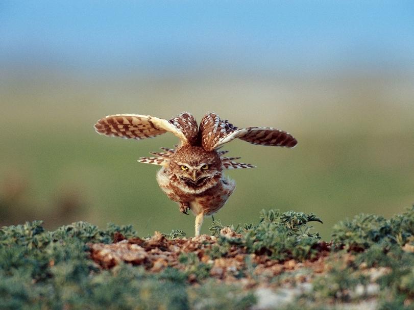 прикольные картинки совы