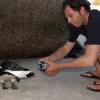 фото - пингвин