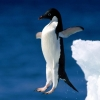 jumping-penguin