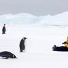 pingvin009