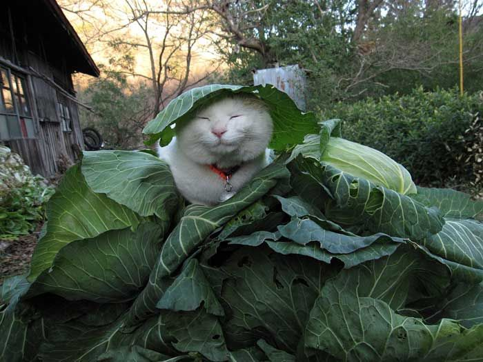 кот, излучающий позитив