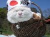 Широнеко - настоящий японец!