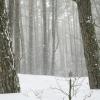 лес в снегу март 2013