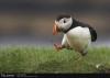смешная птица тУпик