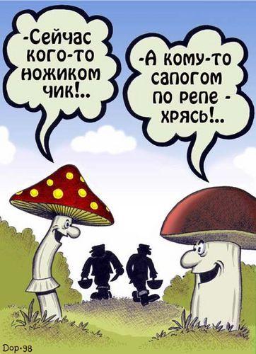 grib Что нужно знать о грибах – полезные ссылки + определители грибов