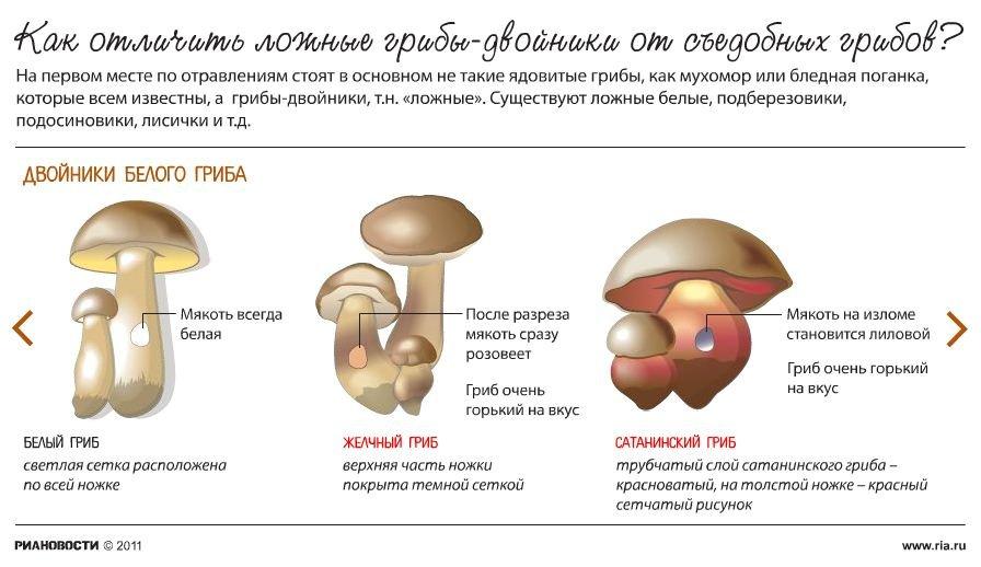 Ложные грибы