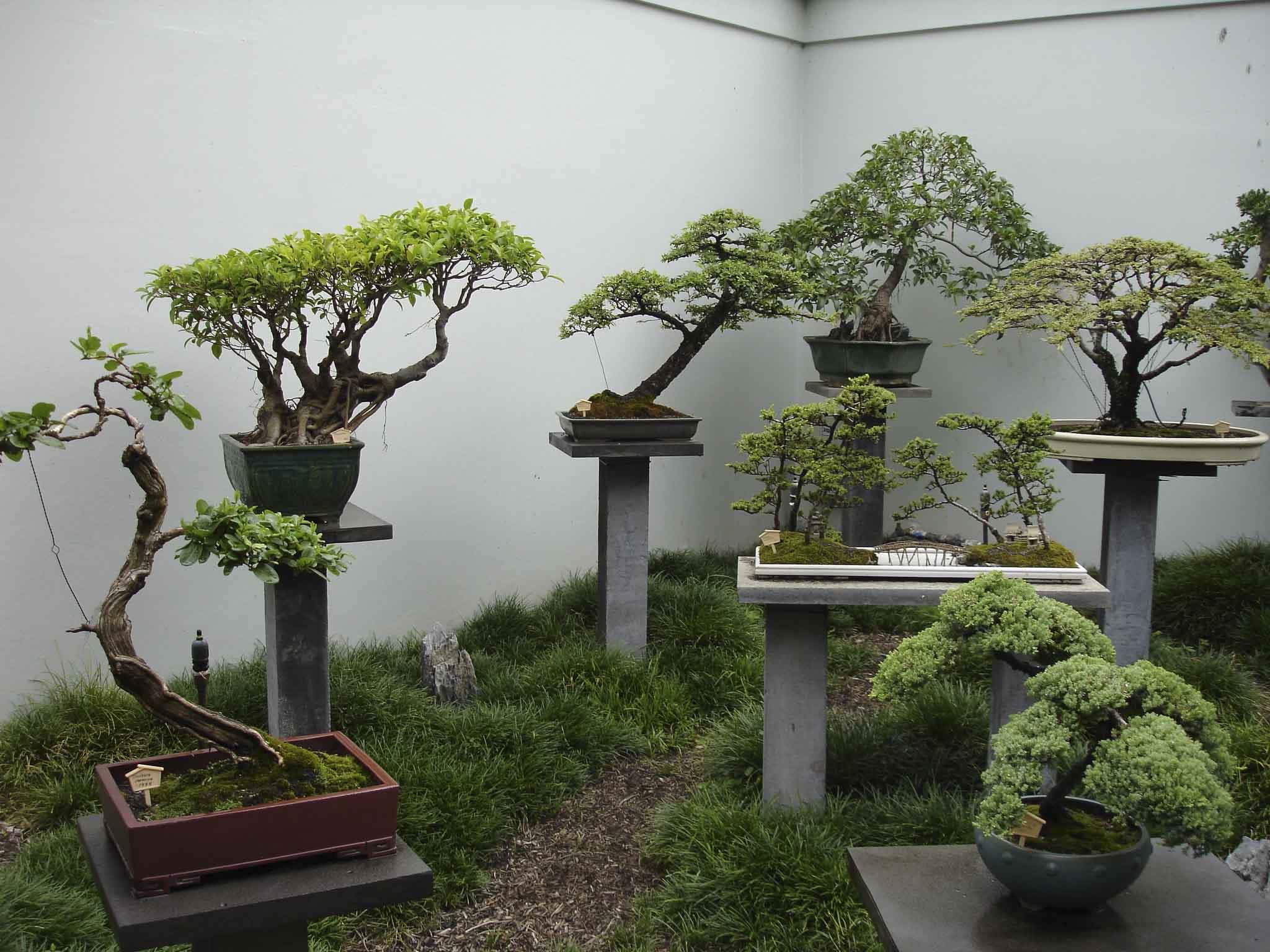 Банзай дерево своими руками фото